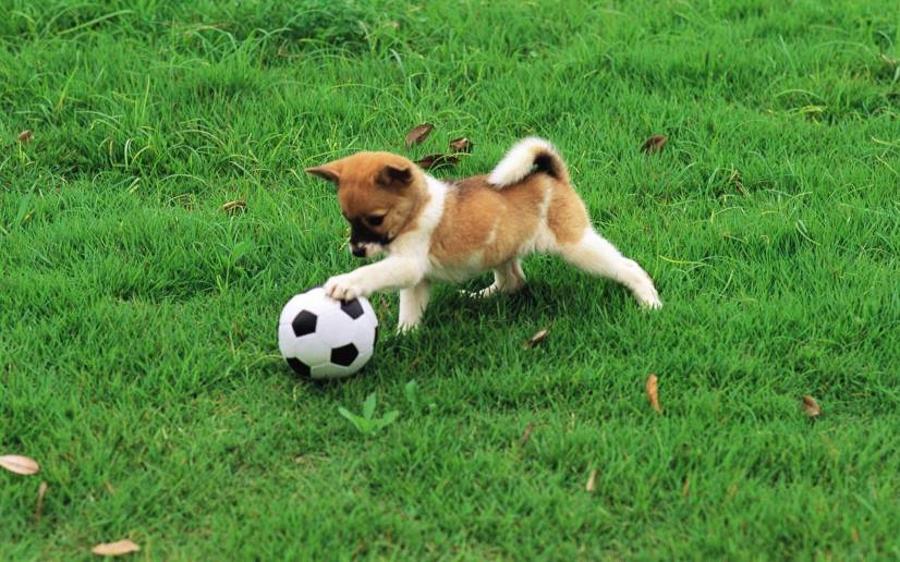 Η σωστή εκπαίδευση σκύλων εξασφαλίζει μία ομαλή συγκατοίκηση