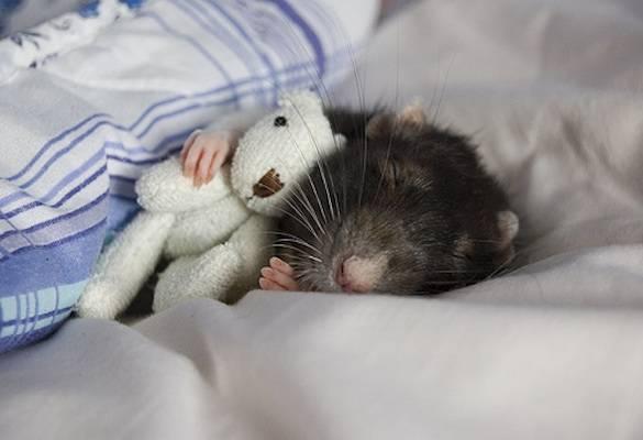 ποντικάκια με αρκουδάκια