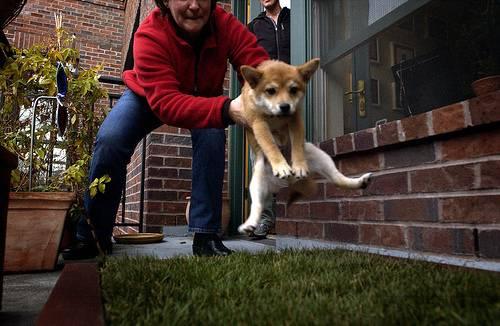 """Πως θα μάθω το σκύλο μου να """"λερώνει"""" εκτός σπιτιού"""