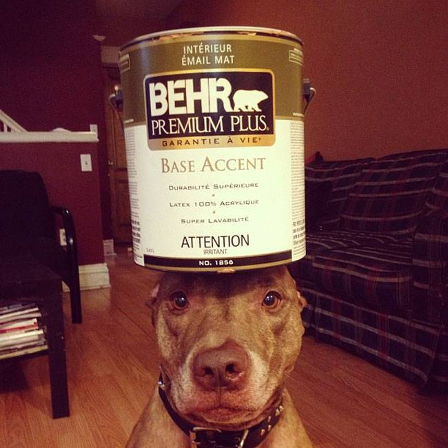 Ο Σκυλος με την μεγαλύτερη υπομονή