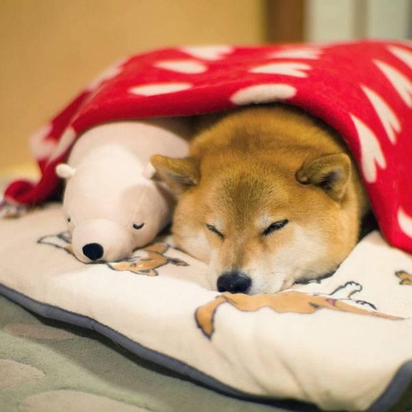 σκυλος κοιμαται με το αρκουδακι του