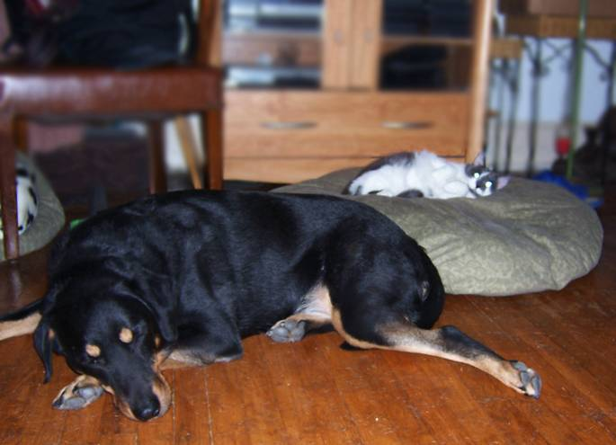 κλεμμενα σκυλο κρεβατια