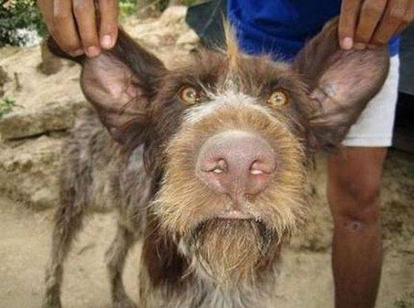 τα ποιο ασχημα σκυλια