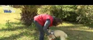 Σκύλοι οδηγοί τυφλών