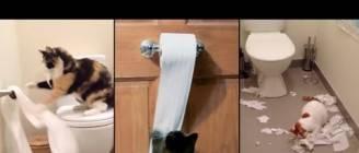 Cats VS Toilet Paper | Funny Cats VS Toilet Paper Compilation