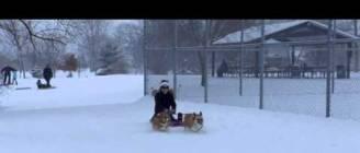 Corgi Sled Dogs