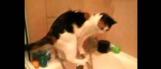 Cat + Curiosity + Bathroom (Кошка + Любопытство + Ванна)