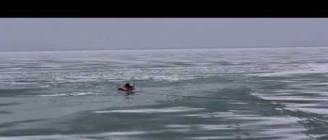A dog falls down in Lake Michigan- Chicago