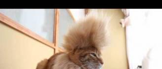 モヒカン Mohawk cat