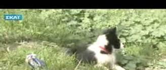 Εκπαίδευση σκύλου - 2 μηνών