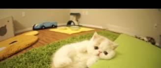 Kitten Bun Bun's Funny Reactions to Camera
