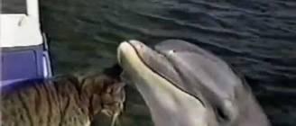Дельфин и кот!!!