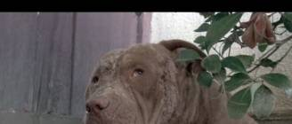A must see amazing Pit Bull Rescue - Please share.