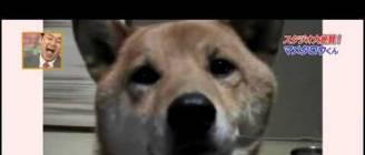 Έξυπνο σκυλί που χαμηλώνει τη φωνή του σιγά σιγά