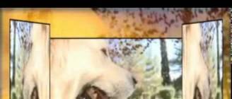 Επιλογή φυλής σκύλου Παρατρίχα