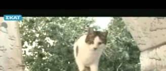 Παχυσαρκία σε σκύλο & γάτα