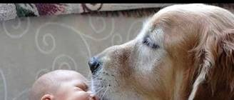 Dogs Meeting Babies for First Time Compilation 2014 [NEW HD]