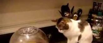 Cat Terrorized by Popcorn