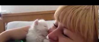 cute kitten kisses my face :)