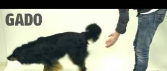 Taikuutta koirille - Magic for dogs