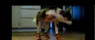 Dogs in Boots Compilation