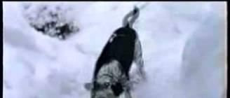 Dog Having a Blast in the Snow - Video.flv