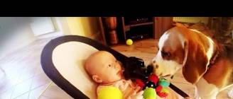 Guilty dog apologises to baby for stealing her toy