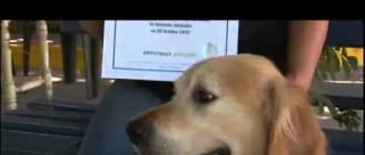 Loudest Dog Bark In The World - Guinness World Record