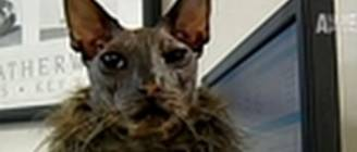 WTF- World's Ugliest Cat