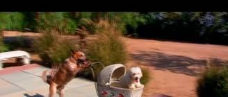 50 Incredible Dog Tricks!