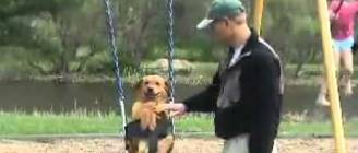 Dog likes going on the swing