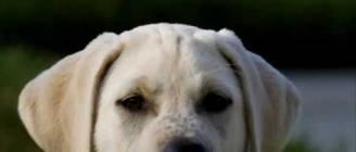Puppy Photo Everyday