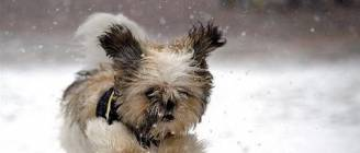 """Dogs Playing in Snow Compilation"" 
