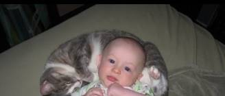Funny Cats Protecting Babies Compilation 2014 [NEW HD]