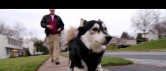 Derby the dog: Running on 3D Printed Prosthetics
