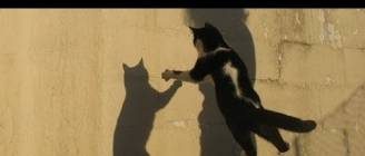 """Cats Chasing Shadows Compilation"" 